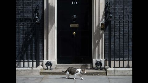 Larry, the 10 Downing Street cat, prowls outside the door of number 10 Downing Street in London on July 13, 2016, as Prime Minister David Cameron prepares to address his final Prime Minister's Questions at the House of Commons.British Prime Minister David Cameron is leaving his official 10 Downing Street on July 13 to make way for Theresa May, but one resident is staying put: Larry the cat. Larry has been stalking the corridors of power since 2011, when he was brought into the prime minister's office to handle pest control affairs. / AFP / OLI SCARFF        (Photo credit should read OLI SCARFF/AFP/Getty Images)