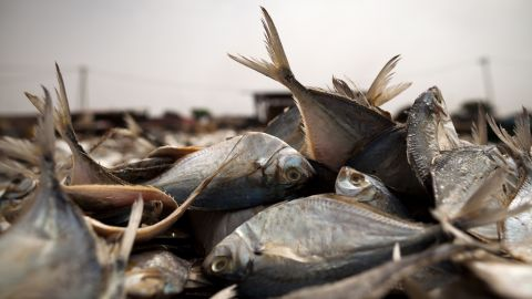 West African economies lose around $2 billion a year to illegal fishing.