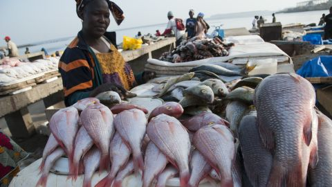 Woman at Soumbedioune fish market. Jobs preparing and drying fish are put at risk by illegal fishing.