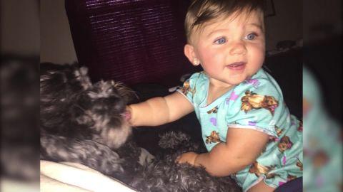 Dog dies after saving infant from fire PKG _00010802.jpg