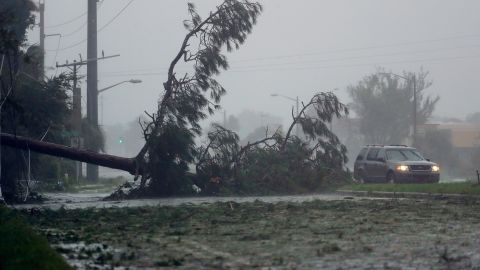 A car drives past a downed tree as the hurricane moves through Daytona Beach, Florida, on October 7.