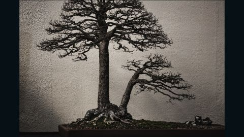 """He captured this smooth-leaved elm while it was indoors. """"I was really taken by the light that day which came in through the skylights and felt diffuse and crisp at the same time, rendering the tree more like an old painting than a photograph,"""" says Voss. (Credit: Stephen Voss)"""