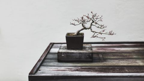 """One of the smallest and most delicate trees at the US National Arboretum, this Crape Myrtle represents an """"appreciation of the stark, simple beauty of bonsai -- without artifice or pretension,"""" says Voss. (Credit: Stephen Voss)"""