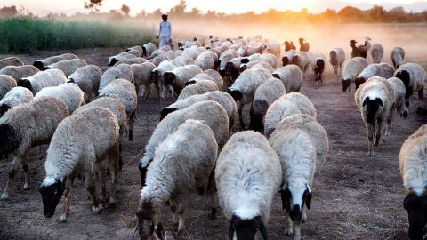 """Riddhima Singh Bhati, India: """"This part of Rajasthan is badly affected by intense heat waves and dryness because of decreased precipitation. The anticipated rise in temperature due to climate change poses formidable challenge to development of livestock in India."""""""