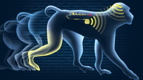 The implants transmit signals wirelessly.