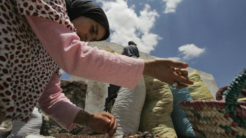 For centuries, Berber women in Morocco produced Argan oil and used it in food and traditional Moroccan medicine.
