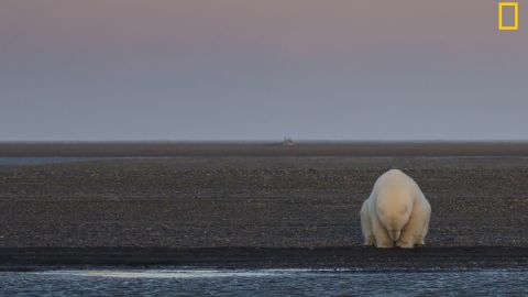 """The """"Climate Change -- In Focus"""" exhibition shows the effects of climate change. <br />Pictured: A solitary bear sits on the edge of one of the Barter Islands, Alaska. There is no snow, when at this time of year, there should be,"""" wrote photographer Patty Waymire. <em>Via National Geographic </em><a href=""""http://yourshot.nationalgeographic.com/"""" target=""""_blank"""" target=""""_blank""""><em>Your Shot</em></a>"""