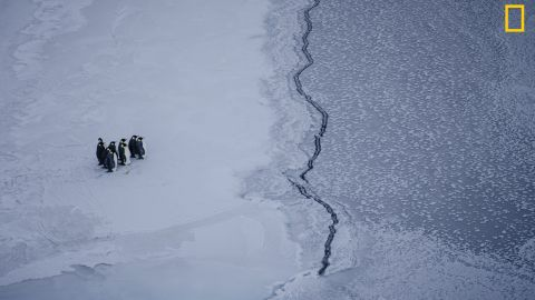 Photo: Kira Morris. A group of emperor penguins faces a crack in the sea ice, near McMurdo Station, Antarctica. <em>Via National Geographic Your Shot</em>