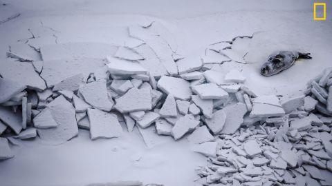 A seal lies near among massive cracks in the sea ice near Ross Island, Antarctica. Photo: Kira Morris, Antarctica.<em> </em><em>Via National Geographic Your Shot</em>