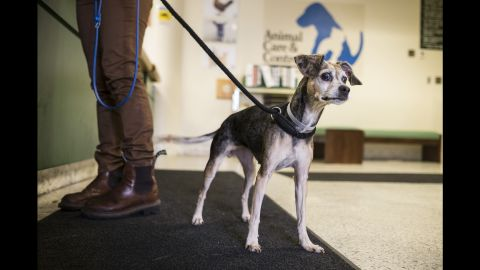 Many of Muttville's dogs are there because their owners passed away or can no longer care for them.