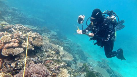 Researcher Grace Frank completing bleaching surveys in November along the less-damaged southern Great Barrier Reef.