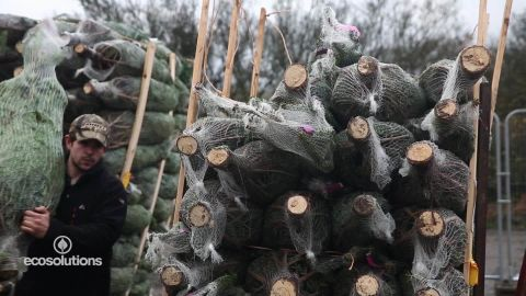 eco solutions christmas tree_00000911.jpg