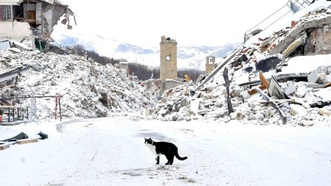Many people  evacuated the town of Amatrice after it was devastated by earthquakes last year.