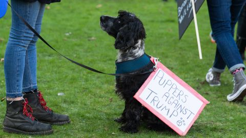 A dog joins demonstrators at the Women's March in London, United Kingdom on January 21, 2017.