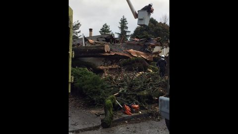 A massive oak tree in Mendocino County, California, fell into a single-story apartment killing a 36-year-old woman, officials said.