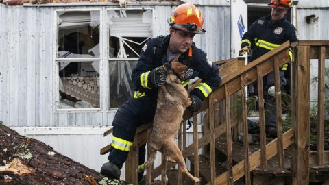 """A firefighter carries a dog that was trapped inside a mobile home in Albany, Georgia, on Monday, January 23. Fire and rescue crews have been searching through the debris after <a href=""""http://www.cnn.com/2017/01/23/us/severe-weather/index.html"""" target=""""_blank"""">severe storms</a> hit southern Georgia over the weekend."""