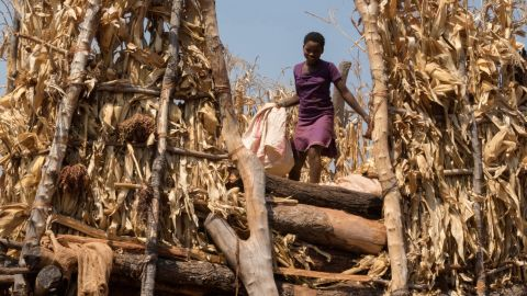 The outbreak is particularly harmful as the region is still recovering from a severe recent drought that left millions food-insecure.