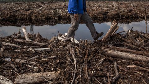 An environmental activist inspects a leveled forest in Sumatra, Indonesia. According to Greenpeace, the destruction of forests has increased greenhouse gas emissions.