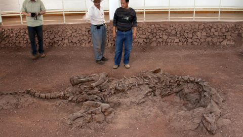 The fossil of 195-million-year-old dinosaur Lufengosaurus preserved as found in the ground in Yunnan Province, China. Researchers discovered ancient collagen and protein in one of its ribs.
