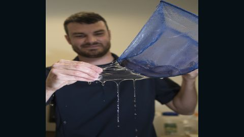 Dr. Ryan Kincer demonstrates the elasticity of the hagfish slime secreted from the the Pacific hagfish within the net aboard Naval Surface Warfare Center Panama City Division (NSWC PCD) Nov. 29, 2016. U.S. Navy photo by Ron Newsome (Released) 161129-N-PB086-014