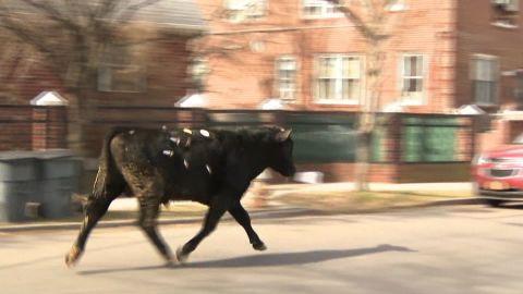 bull new york