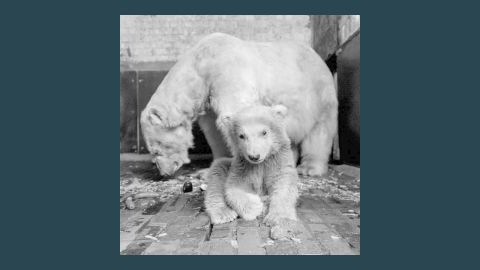 Fritz shared a den at the zoo with his 7-year-old mother Tonja.