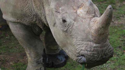 paris rhino poached_00000912.jpg