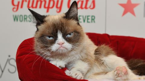 """Grumpy Cat appears at Lifetime's """"Grumpy Cat's Worst Christmas Ever event"""" at Macy's Union Square in 2014 in California."""