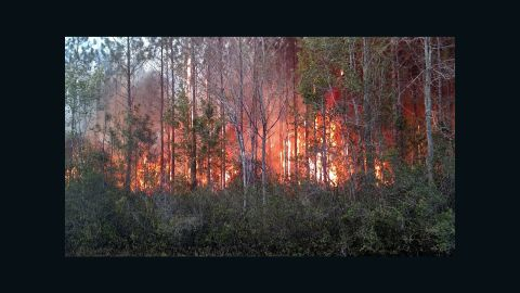 At least 10 structures were destroyed in a wildfire in Nassau County, FL Wednesday, according to a series of tweets on the Florida Forest Services verified Twitter account.The Garfield Road Fire has burned an estimated 350-400 acres along County Route 119 near Bryceville, and is 50% contained at this time, according to the Florida Forest Service.Officials say the fire was caused by a man burning paper book books Wednesday afternoon. Burning household garbage is illegal in Florida.Emergency and firefighting crews from multiple agencies are working throughout the night, and Florida Forest Service officials say the fire is no longer spreading. Evacuations have been ordered along nearby County Route 119 as a precaution.