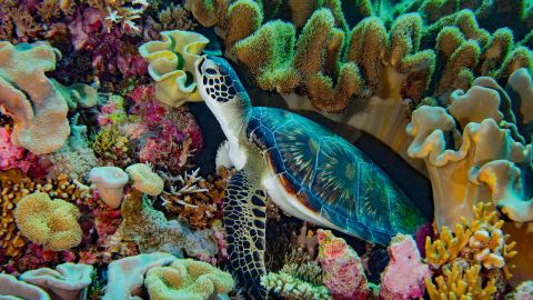 Each reef in the region is a submerged biodiversity hotspot, with millions of reef creatures, haphazardly stacked atop one another, competing for space, light, nutrients and prey, says Asner.