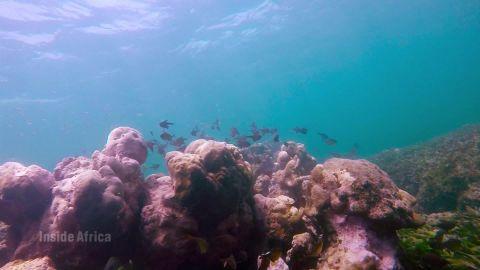 Inside Africa oceans a_00053630.jpg