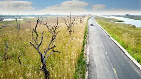 """In the Mississippi Delta, trees are withering away because of rising saltwater, creating """"<a href=""""http://edition.cnn.com/2017/04/20/us/louisiana-climate-change-skeptics/index.html"""">Ghost Forests</a>."""""""