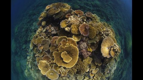 Layers of table corals bloom like a bouquet on the Great Barrier Reef off Port Douglas, Queensland in 2009