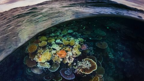 A wave reveals a secret coral garden located on the central Great Barrier Reef  near Port Douglas, Queensland.