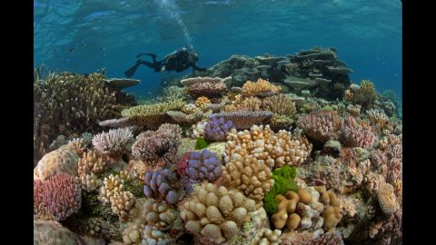 Dr. J.E.N. Veron explores a section of Great Detached Reef on the Northern Great Barrier reef in 2009. The Northern Great Barrier Reef  experienced massive bleaching in 2016.