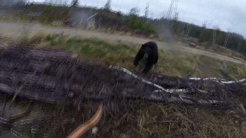 bear attacks hunter