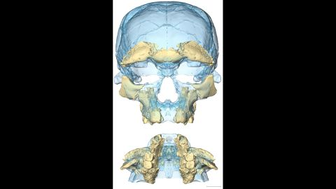 This image provides two views of the pieces found and associated with one of the fossils, thought to be a young adult woman.