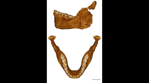Being able to look at this mandible allowed the researchers to compare it to those of modern humans, as well as Neanderthals.