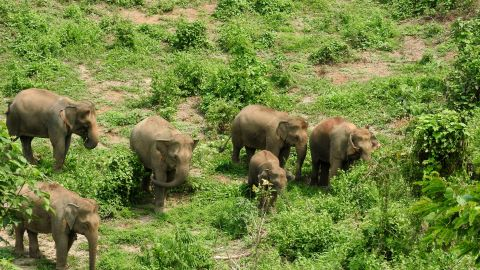 The grounds of the Elephant Conservation Center.