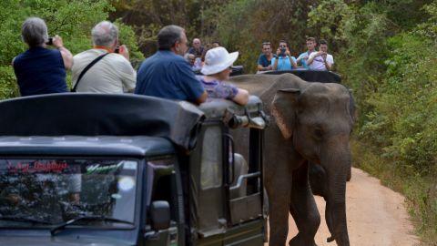 Tourists watch a Sri Lankan elephant walking through a field in Minneriya National Park.