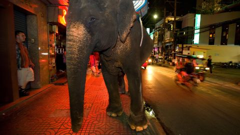 While the elephant is a symbol of Thailand, it is common to see the animals roaming Bangkok with their mahouts (elephant drivers), who sell bags of sugar cane to tourists to feed to the elephants.