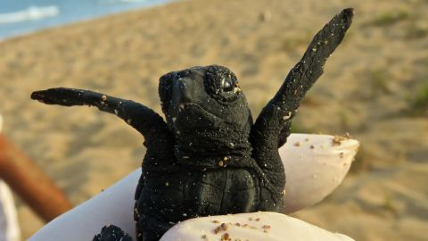 A turtle on the beach in Sur, Lebanon.