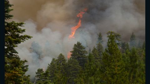 A tree explodes into flames during a wildfire near Sisters, Oregon on Thursday