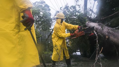 Employees from an electrical company work to clear a fallen tree in Sanchez, Dominican Republic.