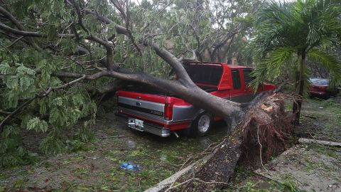 A tree lies on a pickup truck after being knocked down by the high winds in Miami on September 10.