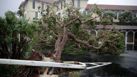 Fallen trees block a parking lot in Fort Lauderdale on September 10.