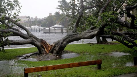 High winds split this large tree in half in Fort Lauderdale.