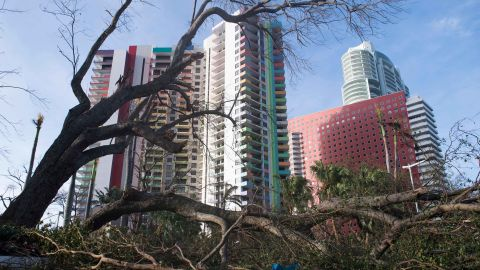 A felled tree blocks a street in downtown Miami on September 11.