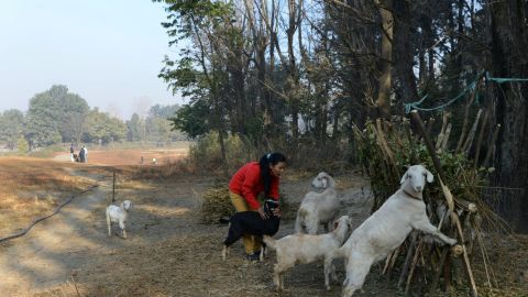 In between studying and household chores -- which include looking after her family's small herd of goats -- she practices at the Royal Nepal Golf Club.