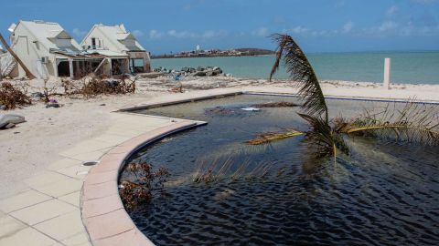 A palm tree sticks out of a pool on the French side of St. Martin on September 11.